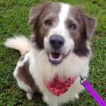 Archie - Adopted!