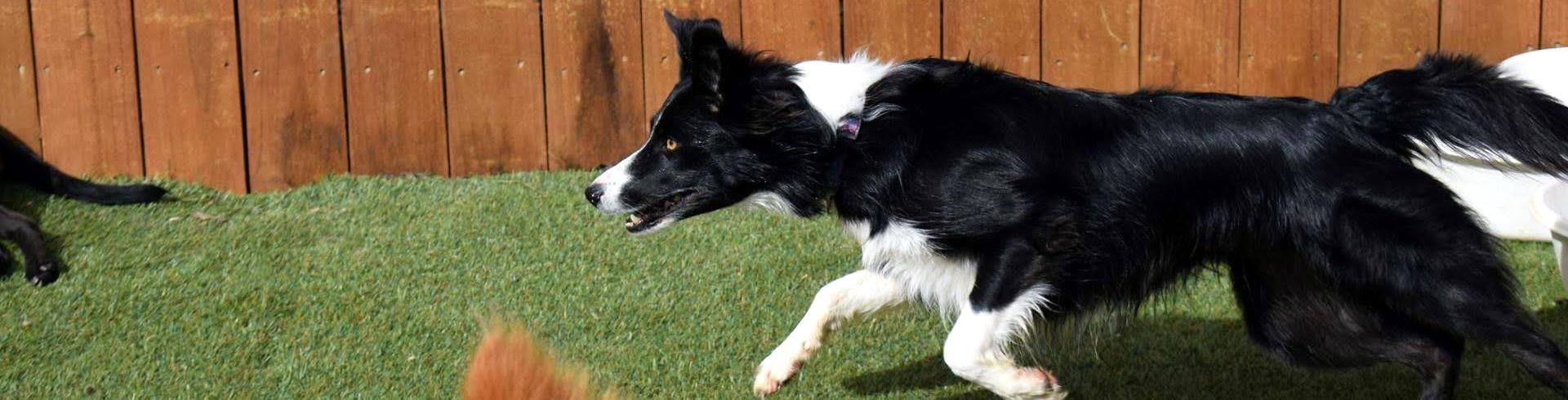 Volunteer & Help Dogs In Need