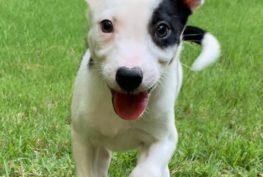 remy_puppy