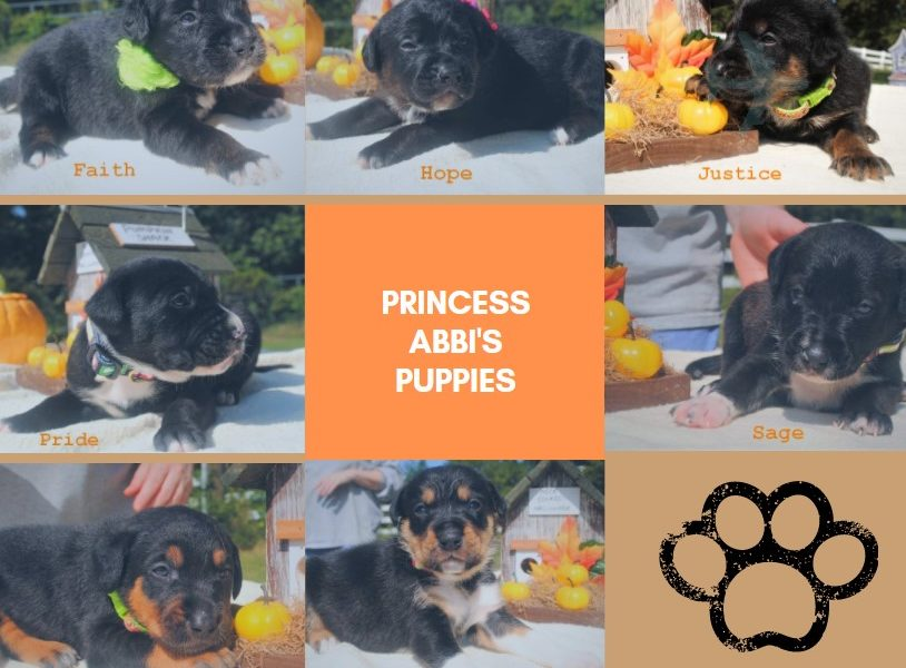 princess-abbi-puppies