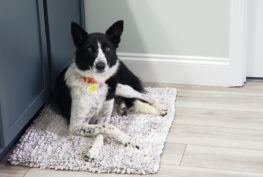 kate border collie