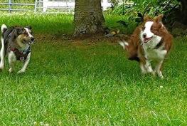 buddy-running