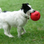sircy-with-ball